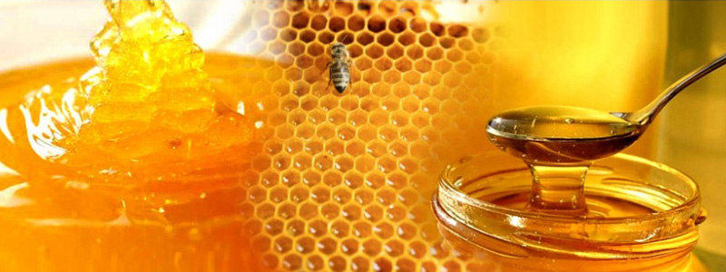 Amrutha Honey Bee Farming