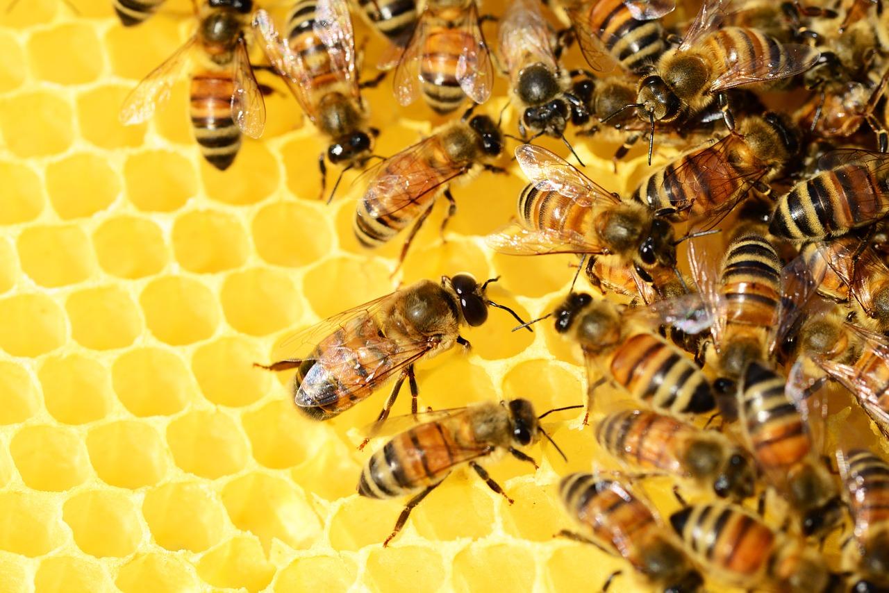 Amrutha Honey Bee Farming